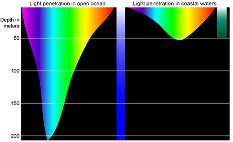 수중에서는 빛의 파장 중 빨간색 계열이 가장 먼저 흡수된다