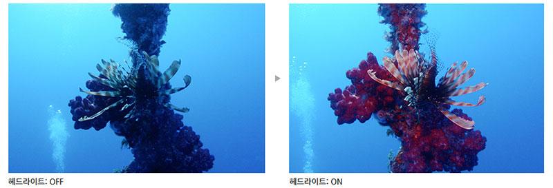 수중 촬영에서 조명은 실제 색상과 가장 가까운 사진을 얻을 수 있는 방법이다