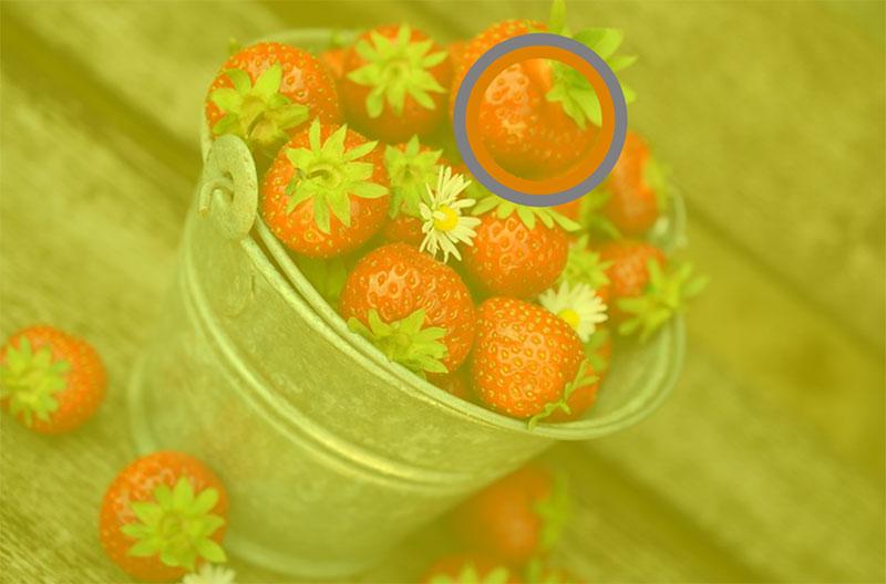 사진 속 딸기의 실제 색상은 주황색에 가깝지만, 우리는 이를 빨간색으로 인식한다