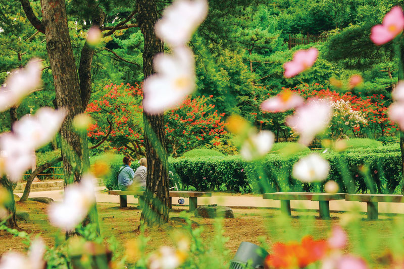 강릉 선교장에서 호젓한 시간을 보내는 사람들. 꽃이 흩날리는 가을이다