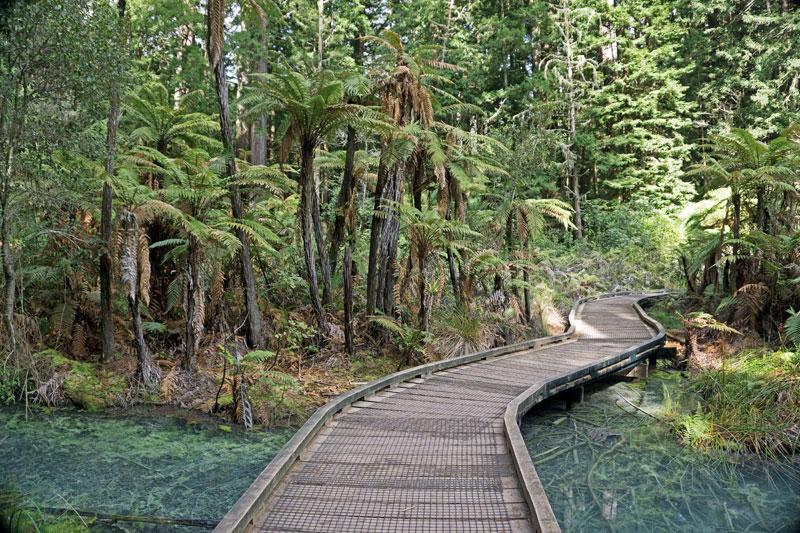 레드우드 수목원의 울창한 침엽수림 군락은 시간을 중생대로 되돌려 놓는다