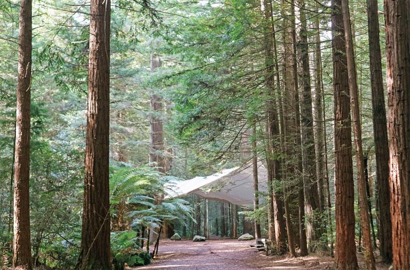 피톤치드 가득한 레드우드 수목원