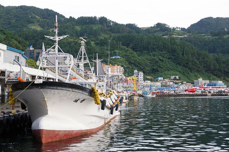 이른 아침, 오징어를 가득 실은 오징어잡이 배가 저동항에 도착했다.