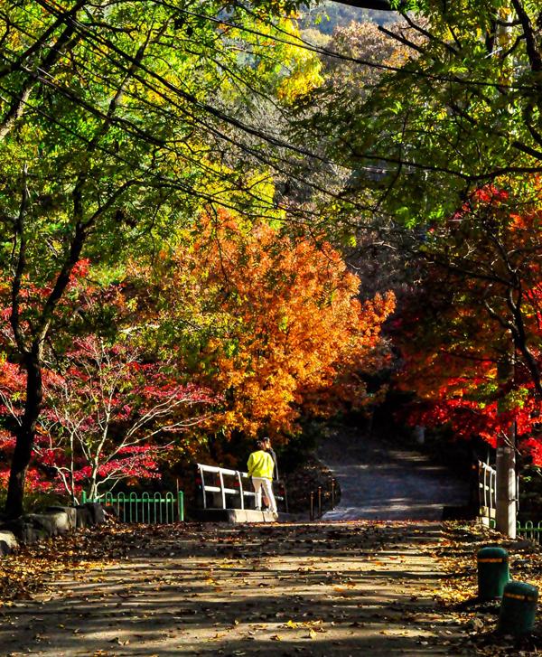 가을이 여전히 머물고 있던 성주산 자연휴양림