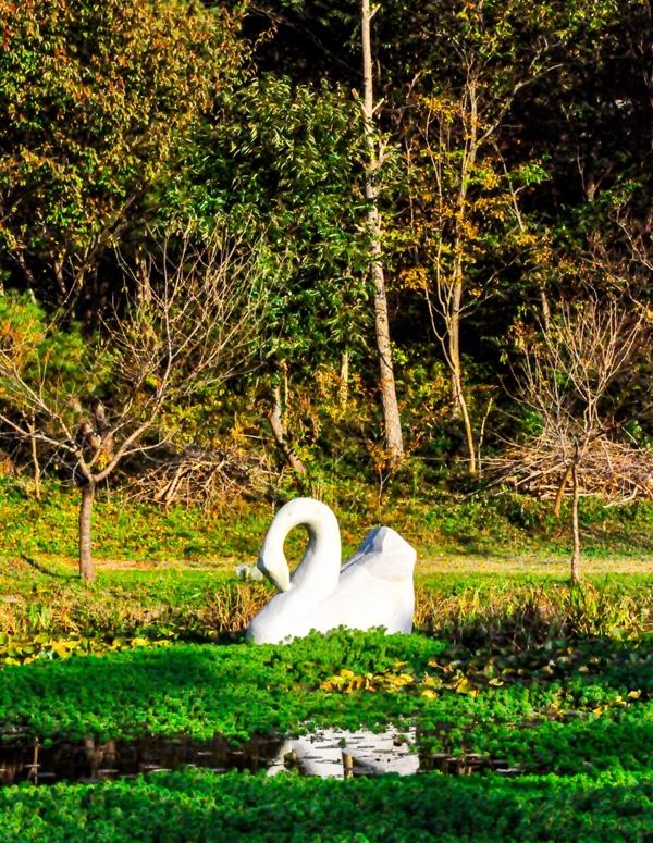 개화예술공원 호수 위를 헤엄치는 백조 조각상. 오석으로 만든 작품이다