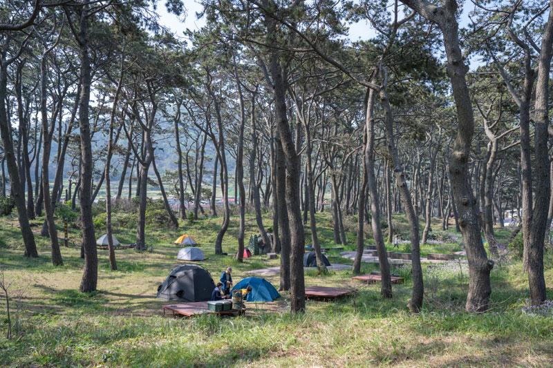 곰솔 숲 아래 펼쳐진 초록의 낙원 국립공원 관매도 야영장