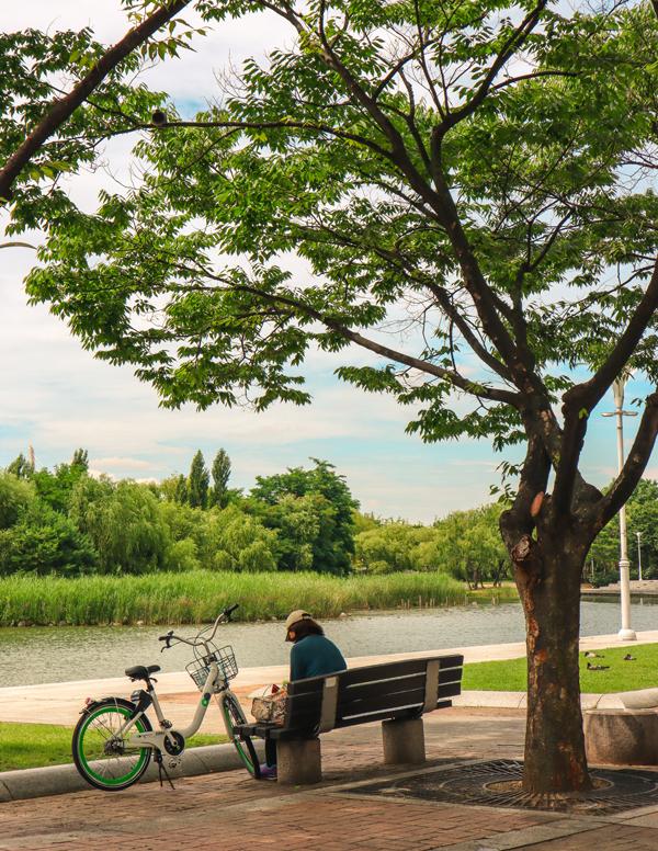 나무그늘이 풍성한 평화의 공원