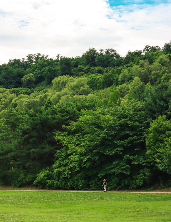 난지천 공원. 온통 초록이다