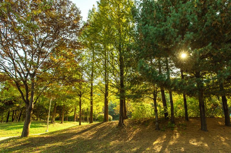 오염된 하천이 생태 하천으로 거듭난 난지천 공원
