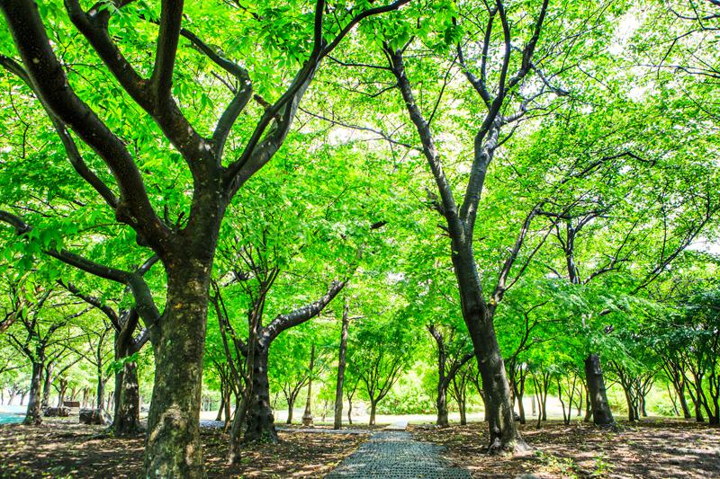 청량한 기운을 품은 제주시의 숲길
