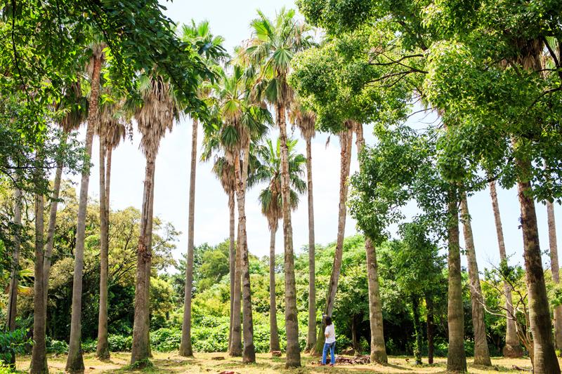 열대우림에라도 온 듯 키 큰 야자수 나무들이 가득하다