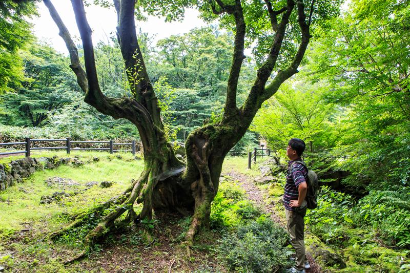 한라생태숲의 명물인 연리목. 볼수록 신비롭고 애틋한 마음이 든다
