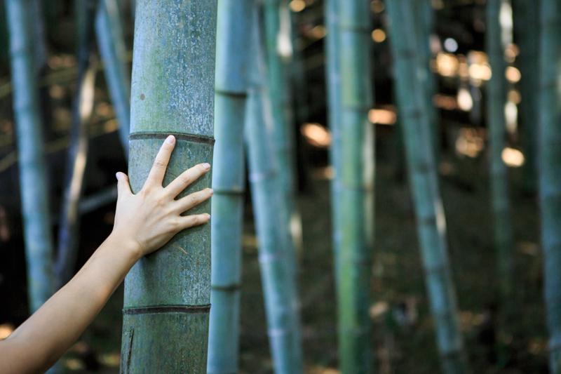 두 손을 힘껏 벌려도 맞잡기 힘든 죽림원의 대나무