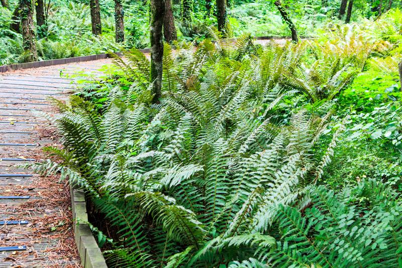 양치식물원에서는 수많은 종류의 고사리들을 볼 수 있다