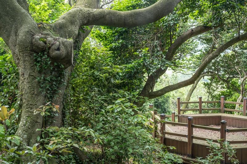 정비 및 후계목 조성사업이 진행 중인 외연도 상록수림