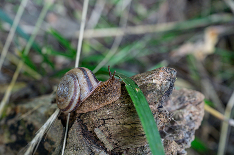 느리지만 꾸준했던 달팽이 걸음에서 섬을 보았다