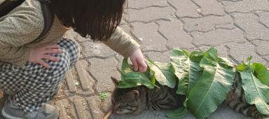 고양이와 어린이의 순수함
