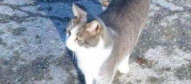 묘지를 방문하는 고양이