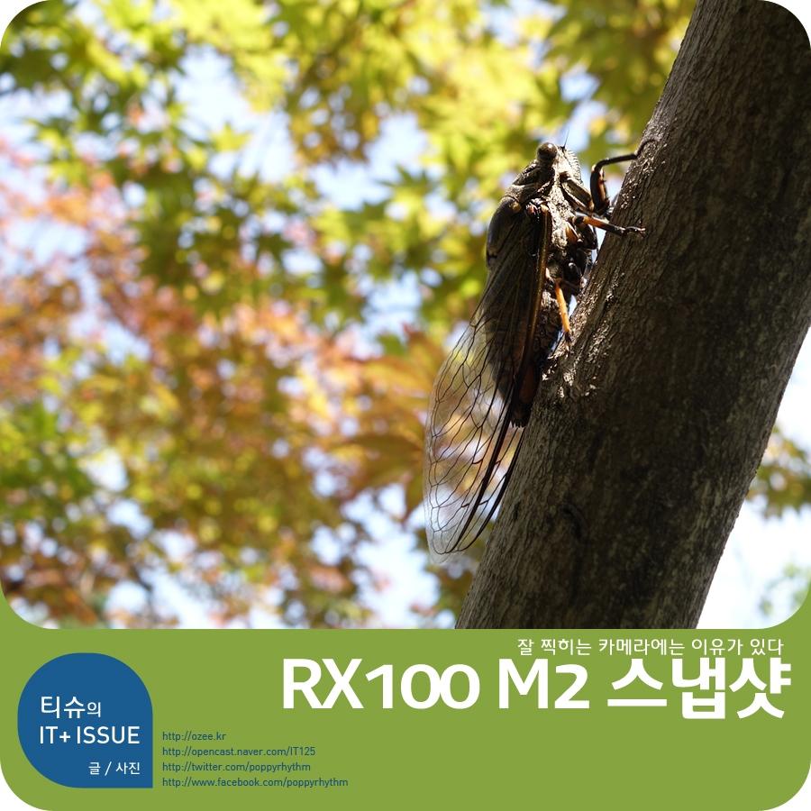 ��ī ��õ RX100M2 ������ - �� ������ ����