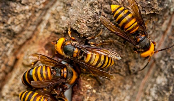 벌초하다 벌에 쏘인다면?