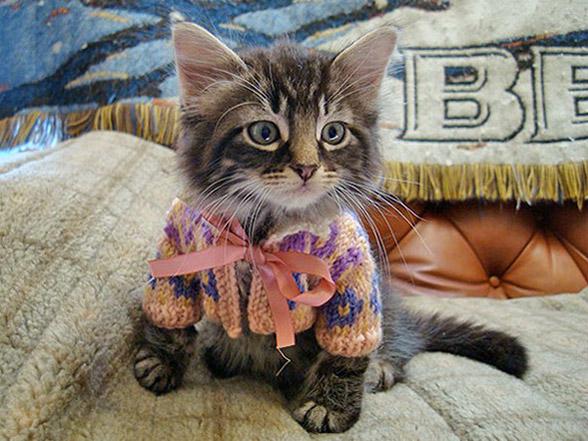스웨터를 입은 귀여운 냥이