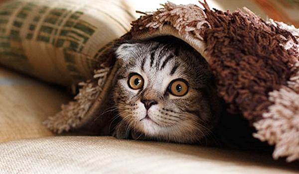 명절에 나 두고 갈 고양?