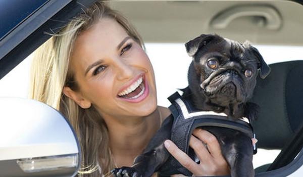 강아지를 안고 운전하면 위법?