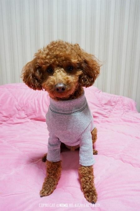 강아지옷 쇼핑몰 추천 : 독신 골지목...