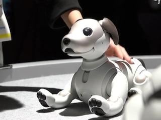 반갑다고 꼬리치는 소니 강아지봇 '아이보(Aibo)'