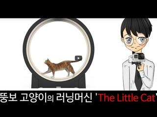 뚱보 고양이의 러닝머신 'The Little Cat'