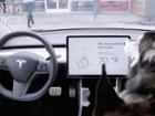 테슬라, 반려동물 위한 '도그 모드' 공개..특징은?