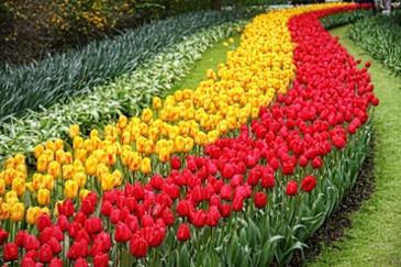 따뜻함이 피어난다,  3월  해외 봄 축제