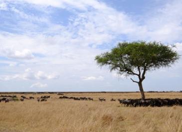 카렌,  아프리카는 여전히 젊다오