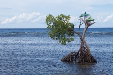 아직 발견되지 않은 땅 Northern Bali