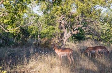 코끼리 똥을 찾습니다, 크루거 국립공원