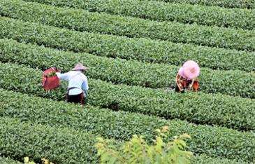 [타이완 레저 농장] 삼나무 숲속 별들의 휴식처, 롱윈 레저 농장