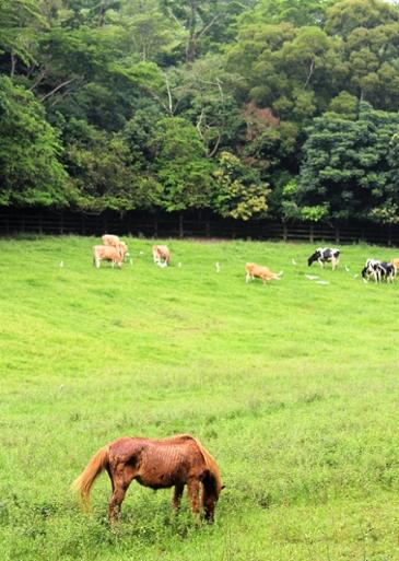 [타이완 레저 농장] 저 푸른 초원 위에, 페이니우 목장