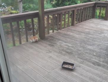 밥먹으러 오는 길냥이 2