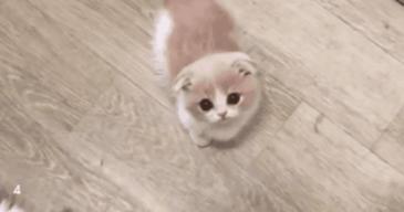 귀여움 그 자체인 아기고양이