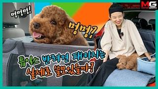 댕댕이를 위한 잇템! 현대 튜익스 반려견 패키지 리뷰 (feat. 다혜친구 은영씨)