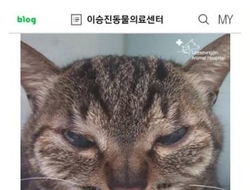 고양이 쌍수