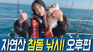 자연산 참돔 낚시! 오후편  natural red seabream fishing F.M.
