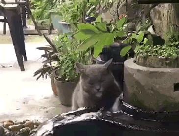 블루투스 고양이