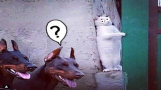 웃긴영상 레전드9999 힐링되는 귀여운 고양이와 강아지가 좋아하는 일상 웃음찾기 베스트10 동물 Vlog 뱀 반려동물농장 애완견 애완묘 모음 #2
