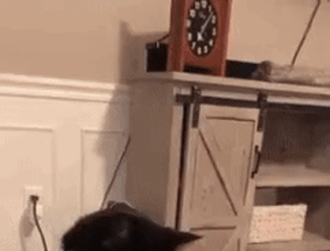 집사가 마음에 들지 않았던 고양이