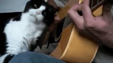 기타치는 냥이