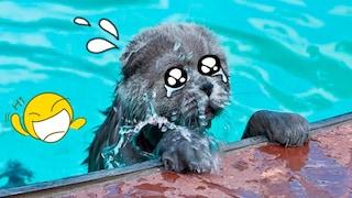 웃음참기 레전드 어려움 귀여운 고양이와 강아지가 좋아하는 동물 동영상 모음