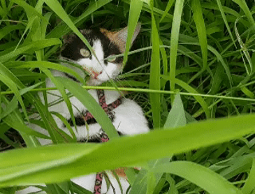 풀을 너무 좋아하는 고양이
