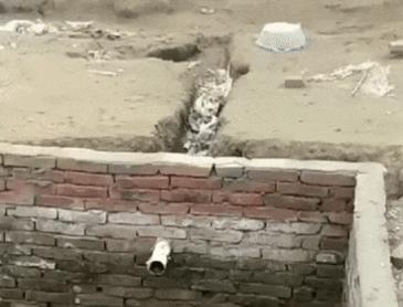 벽 오르는 댕댕이