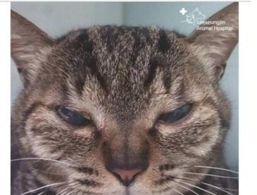 고양이 쌍수 후기